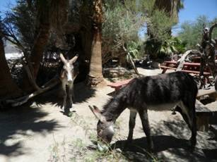 Description: burros.jpg