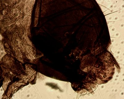 silkworm moth larva4