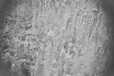 Plants (ISO 400 1/500 Sec Narrow Field)