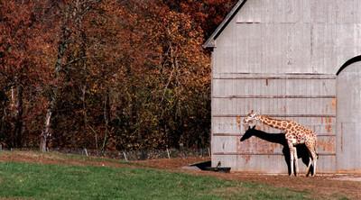 Tennessee Game Farm