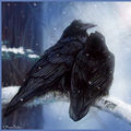 Ravens of Crow Haven