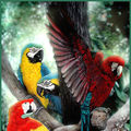 A Wild Bunch - Macaws