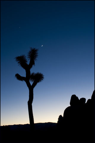 Joshua Tree Twilight 1