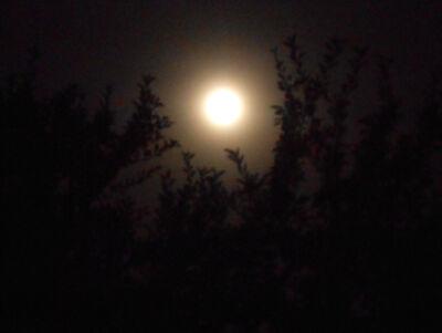 Luna.14.06.19DSCN7479 217