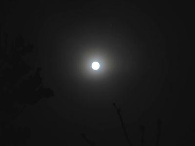 Luna.10.02.17.DSCN4579