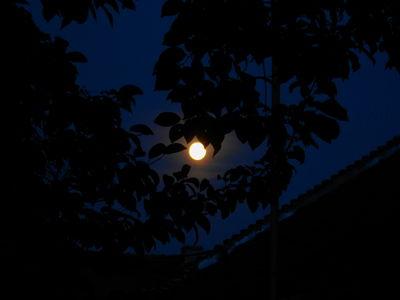 Harvest Moon 15.09.16.DSCN3241