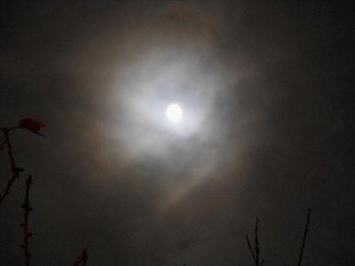 Moon Corona.Super Moon.13.11.16.DSCN3961