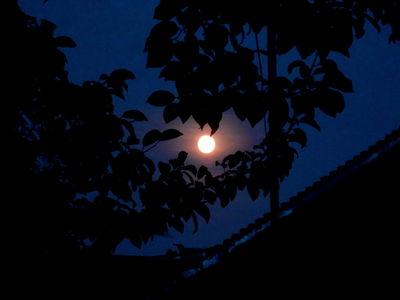 Harvest Moon 15.09.16.DSCN3244