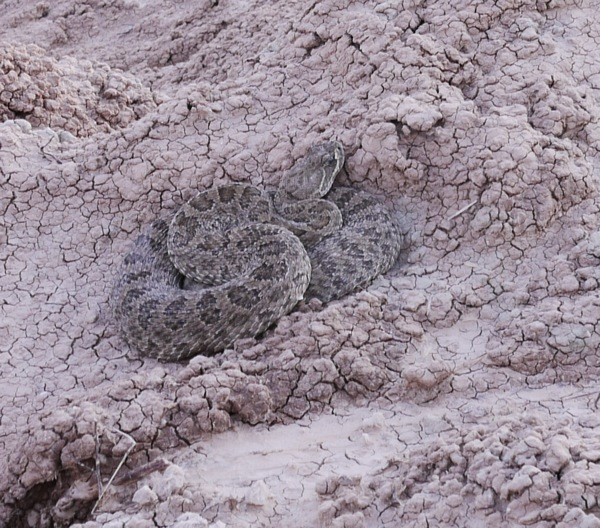 Rattle Snake Badlands SD