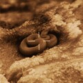 Rattle Snake with Insight MTM 25µ 320x240