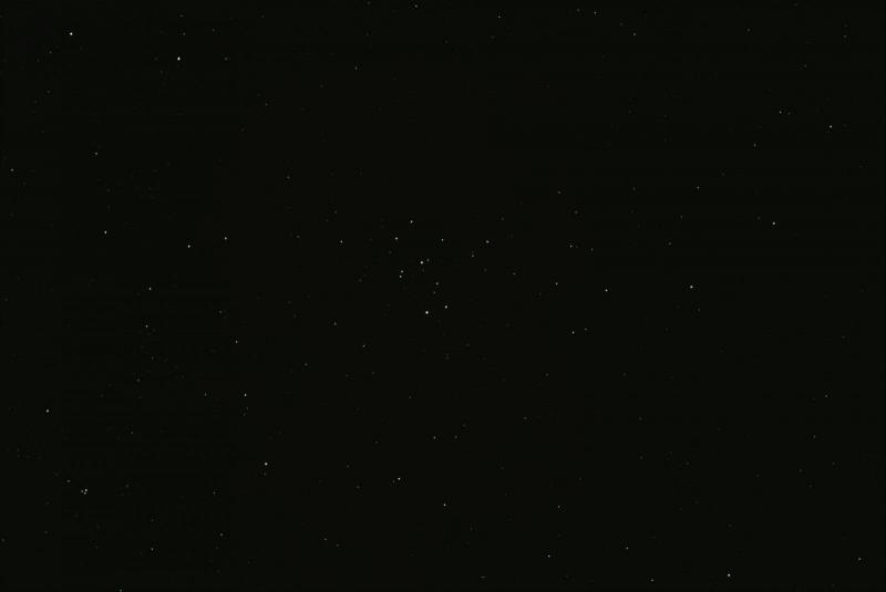 Rosette(32l,f,b,d).jpg