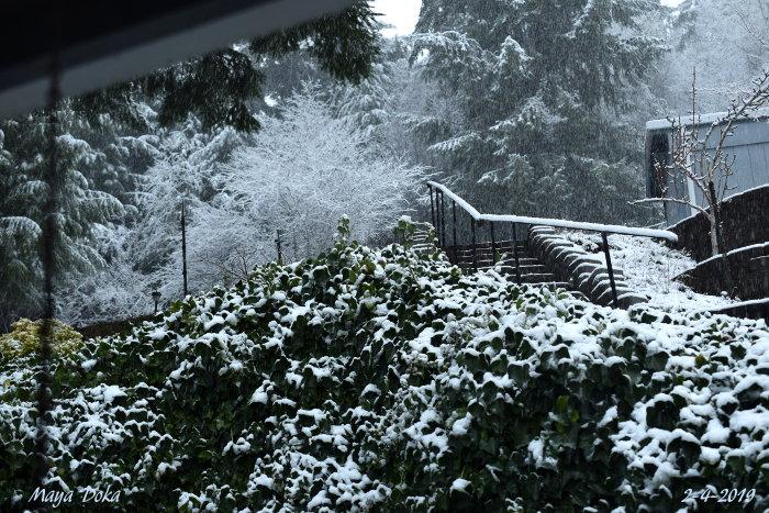 snowyday2_4_2019smDSC_0433.jpg