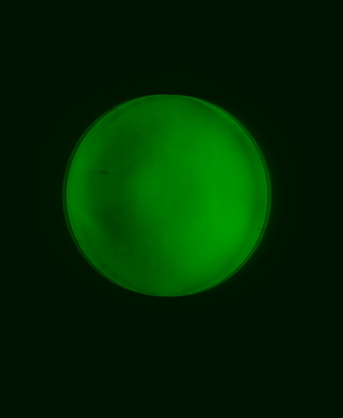 110ED, Green, at focus.jpg
