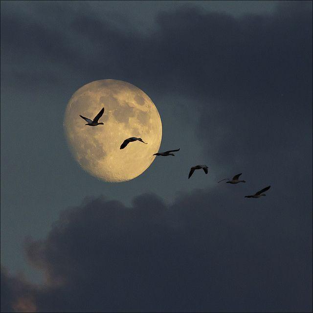 10 geese and moon.jpg