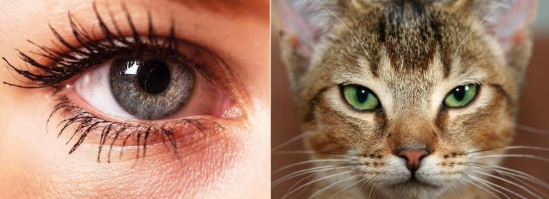 127 eye pupils.jpg