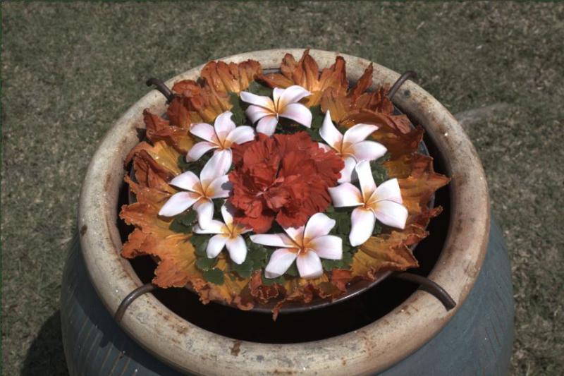 FlowersWhiteBalance.JPG