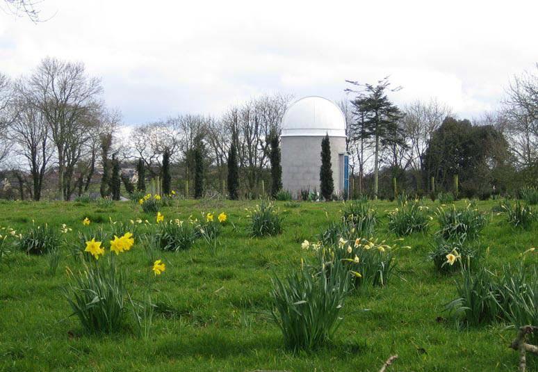 1566110-daffodils1.jpg