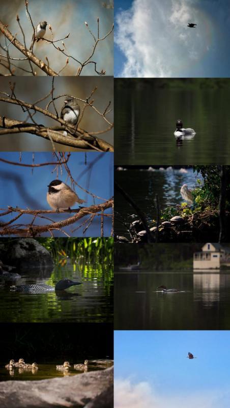 Bird Sampler3.jpg