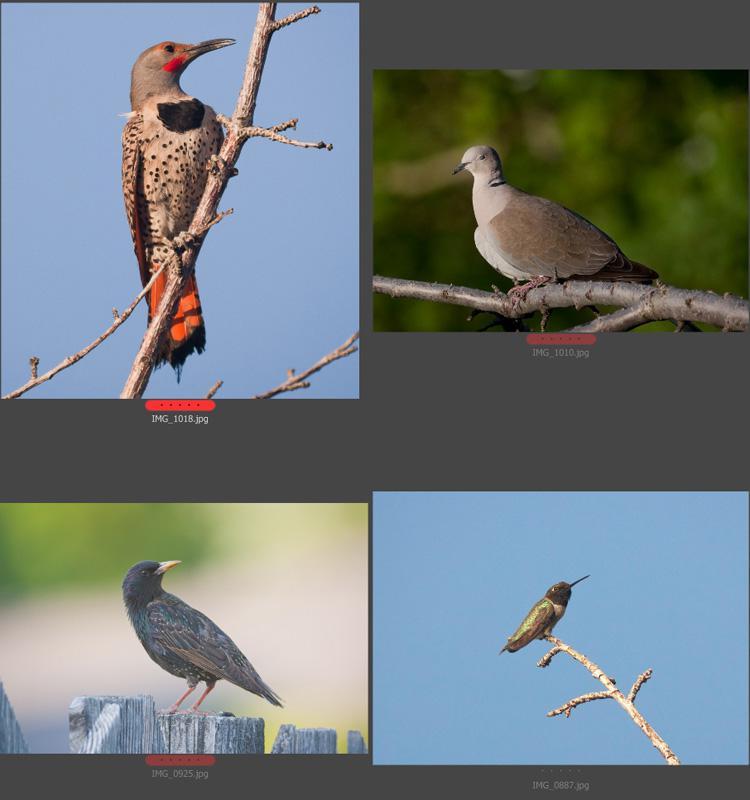 5915943-birds1.jpg