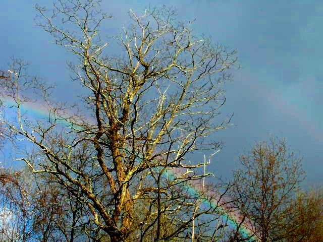 Double Rainbow_saturated.JPG