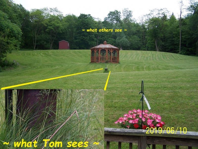 115 grass resolution after eye surgeries.jpg