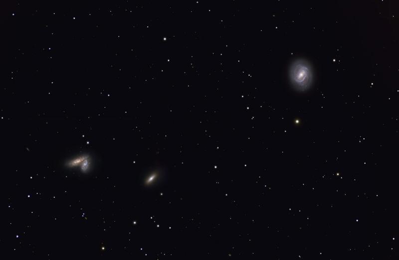 M58-siamese.jpg