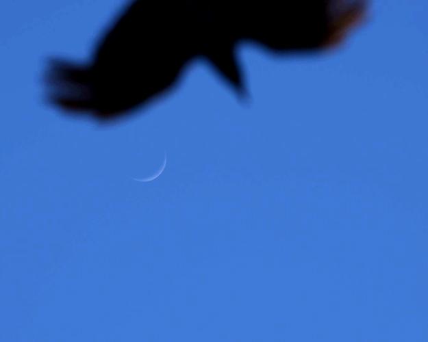 crow2-TG.jpg
