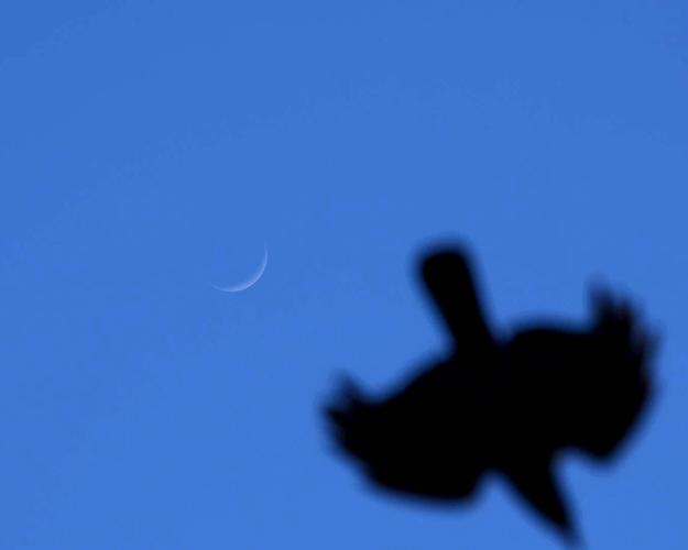 crow4-TG.jpg