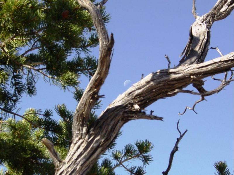 Moon Tree Branches Grand Canyon 5-9-07 DSC02275.JPG