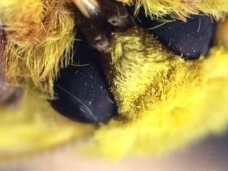 moth close up.JPG