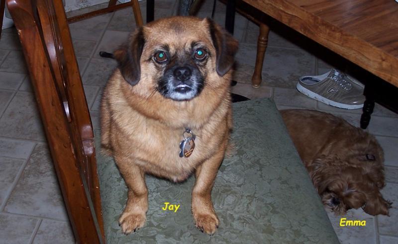 80 Jay pug mix breed.jpg