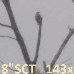 M8+XW14=143X-bird_at_hill-top-crop-lbl-250x250_160848.jpg