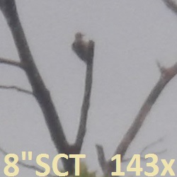 M8+XW14=143X-bird_at_hill-top-crop-lbl-250x250_160801.jpg