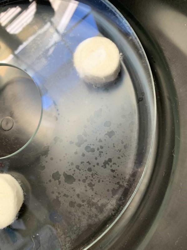 C11 Corector Plate fungus 1-2 small.JPG