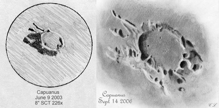 2673070-Capuanus.JPG