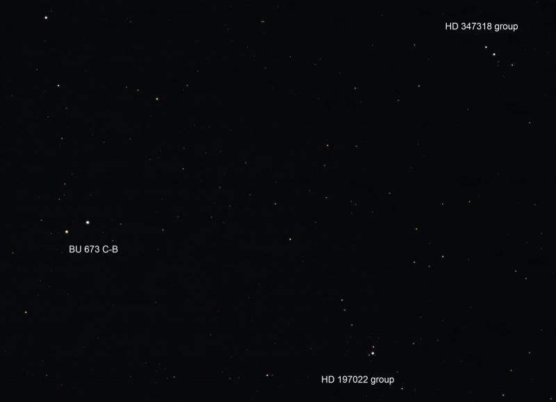 3 groups vulpecula.jpg