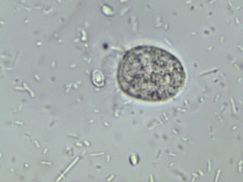 Protozoa.jpg