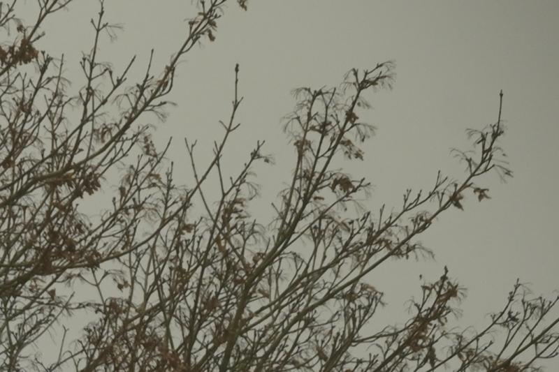 TreeTopRightSixth - 1.jpeg