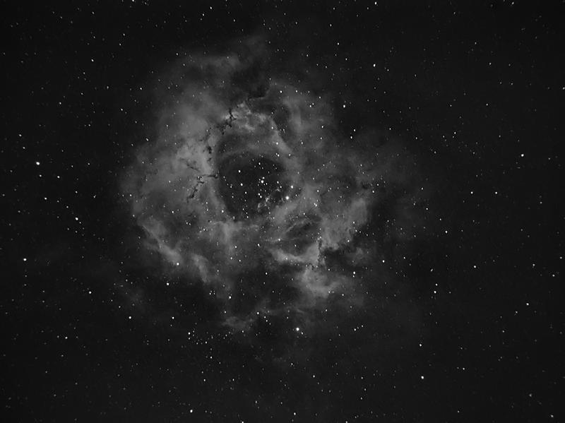 Rosette - Nov 2019.jpg