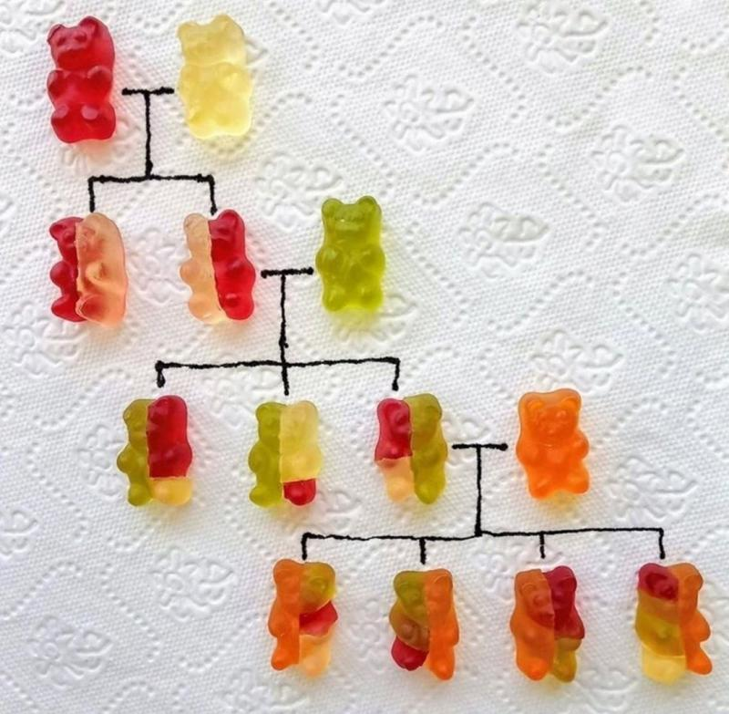 CN Gummy Bear Genetics.jpg