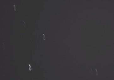 Screen Shot 2020-12-23 at 10.41.23 PM.png