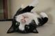 Cat Coolers - last post by JanS