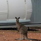 Corona Australis - last post by Terry R